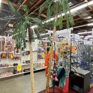 Luau Time! 6' & 8' Palm Trees for Sale in Kenmore, WA