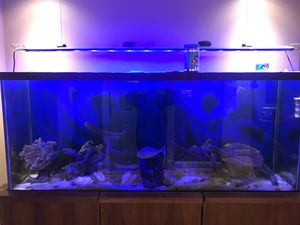 Fish tank with lighting for Sale in Queens, NY