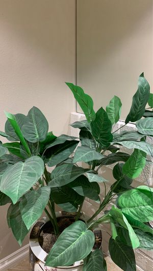Houseplant for Sale in Los Angeles, CA