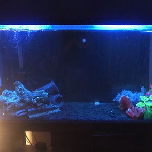 75 Gallon Tank 2 Large Filters And Air Bubbles Stand Also for Sale in Lakewood, CA