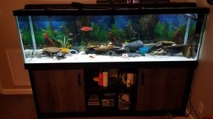 125 gallon aquarium fish tank caves stand canister filters cichlid for Sale in Clarksville, TN