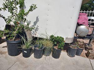 Plantas for Sale in Las Vegas, NV