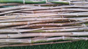 Bamboo sticks for sale PRICE NEGOTIABLE for Sale in Sanford, FL