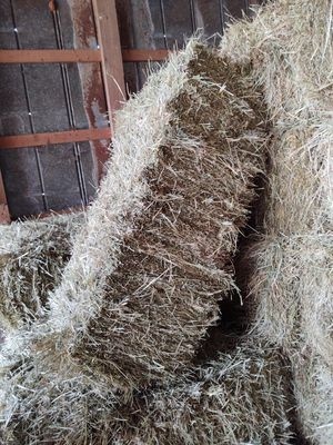 Fescue square hay bales for Sale in Batesburg-Leesville, SC