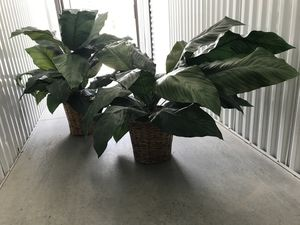5 Artificial Plants for Sale in Orlando, FL