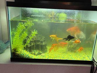 Fish Tank For Sale 20 Gallon for Sale in Covina,  CA