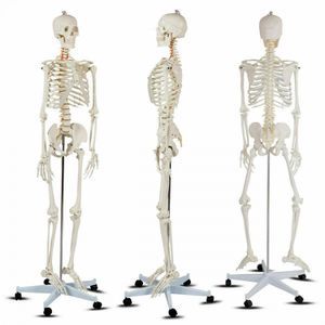 Medical School NEW IN BOX💯 Human Anatomy Class Life-size Skeleton Model for Sale in Irvine, CA
