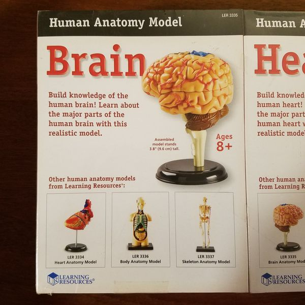 Learning Resources Human Anatomy Models Set of Four
