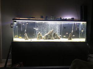 125 gallon fish tank for Sale in Rio Linda, CA