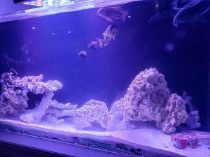 55 gallon all in one acylic fish tank for Sale in Laguna Beach, CA