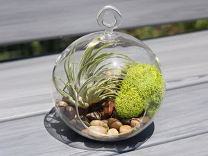 Quarantine Globe Terrarium with everything you need. for Sale in Clermont, FL