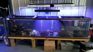 200g 8ft complete tank stand everything inside for Sale in Spring Hill, TN