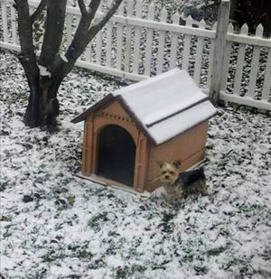 Hard plastic dog house for Sale in Hilliard, OH