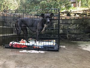 Barely used dog crate for Sale in Pittsburgh, PA