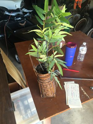 Fake plant for Sale in Chesapeake, VA