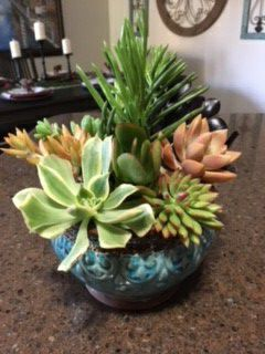Pretty Pot w Succulent Plants / Gift / Decor / Patio / Office for Sale in San Marcos, CA