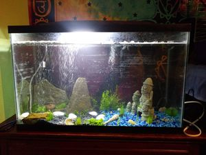 29 Gal Reptile tank for Sale in Medford, OR