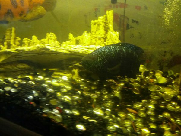 300 gallon complete aquarium w/fish