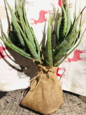 Blue agave plants in burlap sack set of 2 for Sale in Fremont, CA