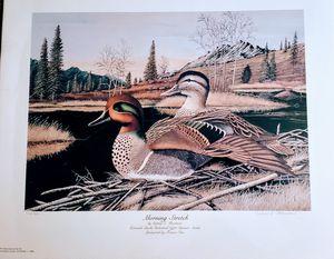 Colorado Duck Print for Sale in Pueblo, CO