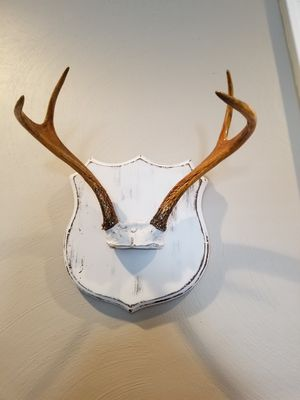 Vintage antlers for Sale in Norfolk, VA