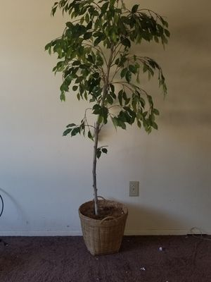 Decorative artificial plant for Sale in Columbus, OH