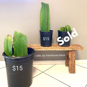 Real Cactus Plant/Succulent Plant in Pot - Price as Shown on the Picture for Sale in West Covina, CA