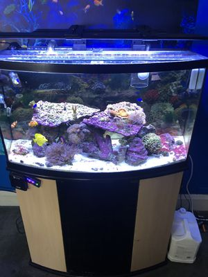 Corals for sale for Sale in Catonsville, MD