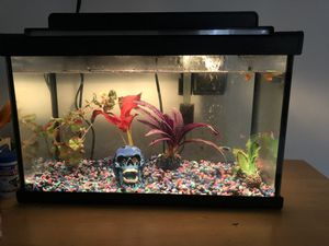 10 gallon aquarium & filter & all accessories & extra substrate & everything you need & FREE fish if wanted for Sale in Los Angeles, CA