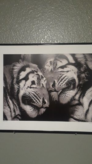 Sleeping Tigers picture for Sale in Austin, TX