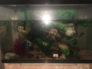 Fish tank comes with fish , crab , stand ,filter for Sale in Las Vegas, NV