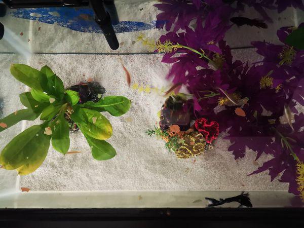 10 galon Aquarium with everything you need.