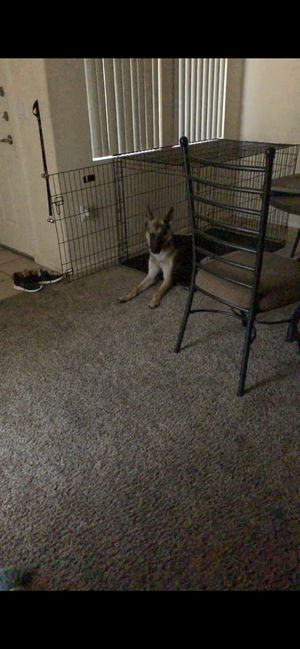 Large Pet Kennel *ANIMAL NOT INCLUDED for Sale in Tempe, AZ