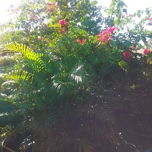Free Plants for Sale in Port St. Lucie, FL