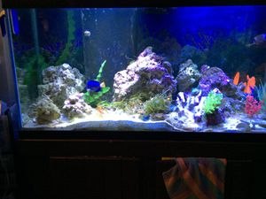 Aquarium, Fish Tank, Filter Sumps for sale (no fish) for Sale in Valrico, FL
