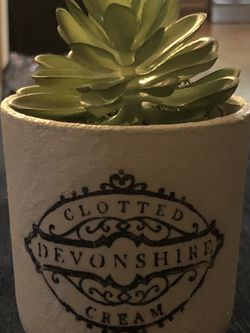 Succulent In A Pot for Sale in Manassas,  VA