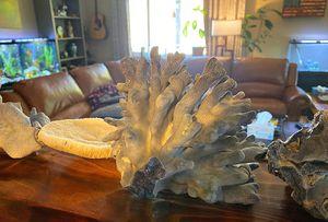 Huge coral skeleton salt water aquarium decoration fish tank for Sale in Citrus Heights, CA