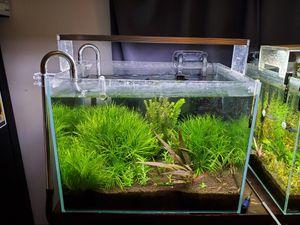 FULL SETUP Rimless Aquarium / fish tank for Sale in Federal Way, WA