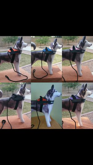Harness with Leash for Sale in Tolleson, AZ