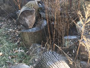 Free wood log for Sale in Chelsea, MA