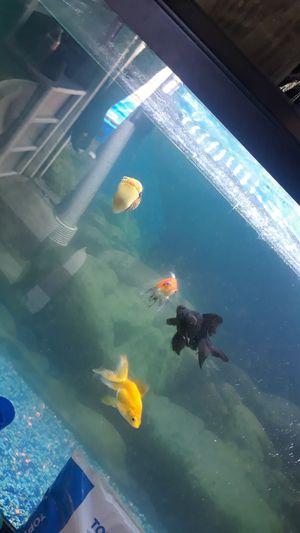 Fish for Sale in Lynnwood, WA