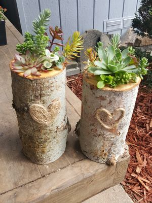 Succulents in tree branch for Sale in Hillsboro, OR