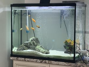 Aquarium Tank with Fish and Supplies for Sale in Jessup, MD