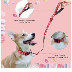 Collar and Leash Size Medium for Sale in Paramount, CA
