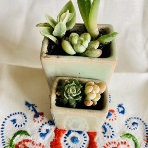 Live Succulent Mini Vintage planters. for Sale in Tracy, CA