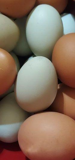 Farm Fresh Eggs for Sale in Ashley,  OH