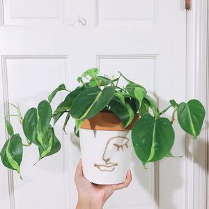 Face Terra Cotta Pots 💚 for Sale in Los Angeles, CA