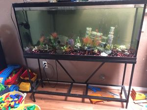 55 gallon tank w/decor, sucker fish & more for Sale in Stockton, CA