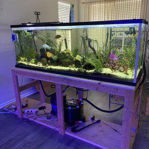 150 Gallon Aquarium/Fish Tank & Equipment for Sale in Menifee, CA