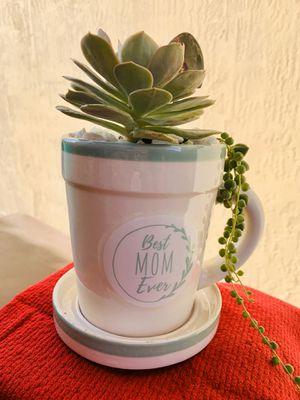 Succulent arrangement | live succulent plant | Succulent Gift for Sale in Homestead, FL